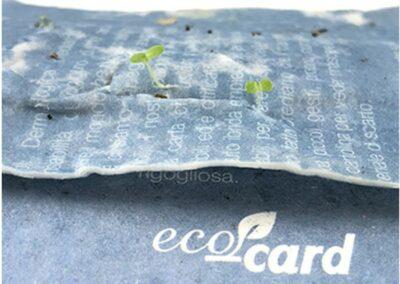 ecocard-growing1