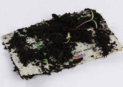 ecocard-growing2
