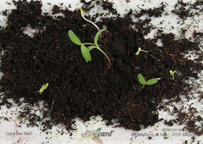 ecocard-growing3